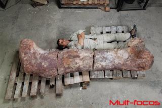 fêmur do dinossauro, gigante