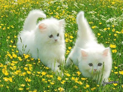 الأمراض التي تسببها القطط