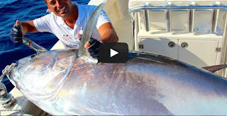 Great Tuna 210 kg