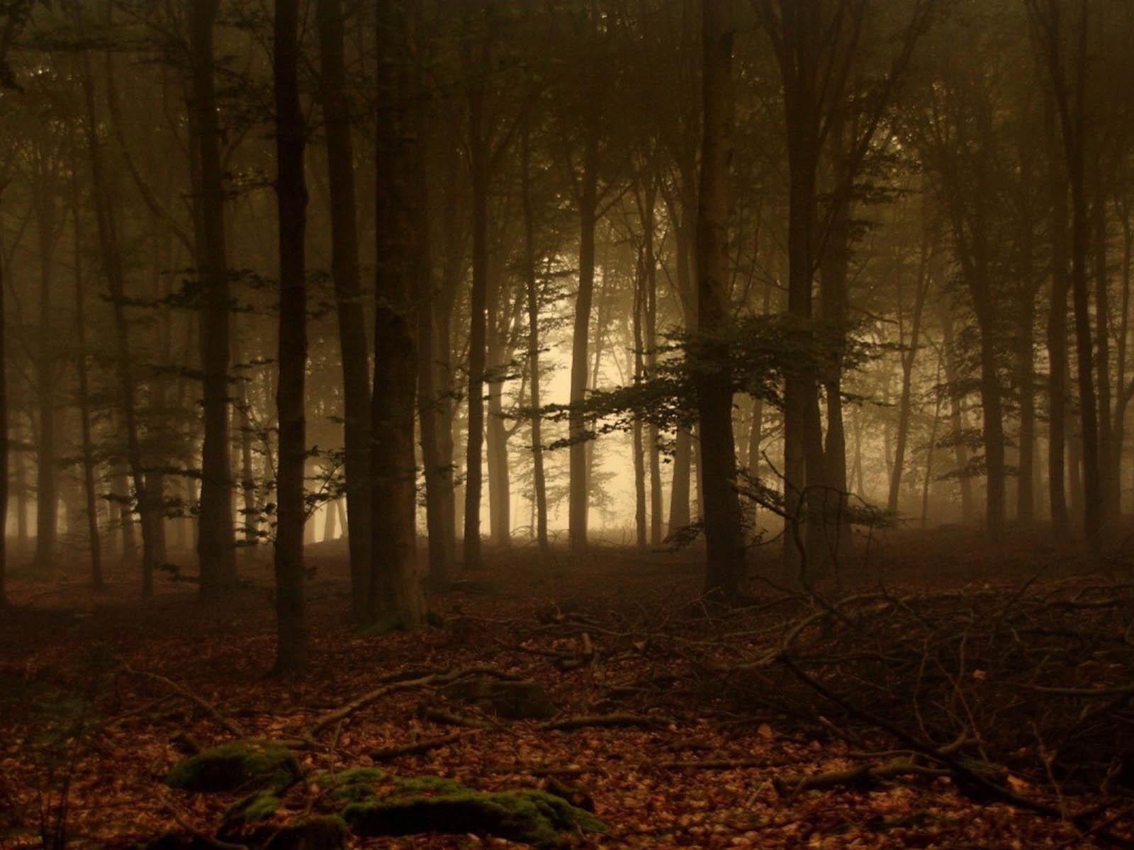 Forest Desktop Wallpapers  Twilight Forest Desktop Backgrounds    Gothic Forest Backgrounds