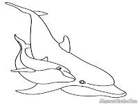 Ikan Lumba-Lumba Bermain Didasar Laut