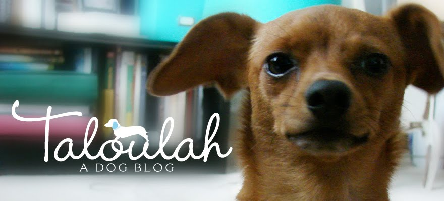 Taloulah