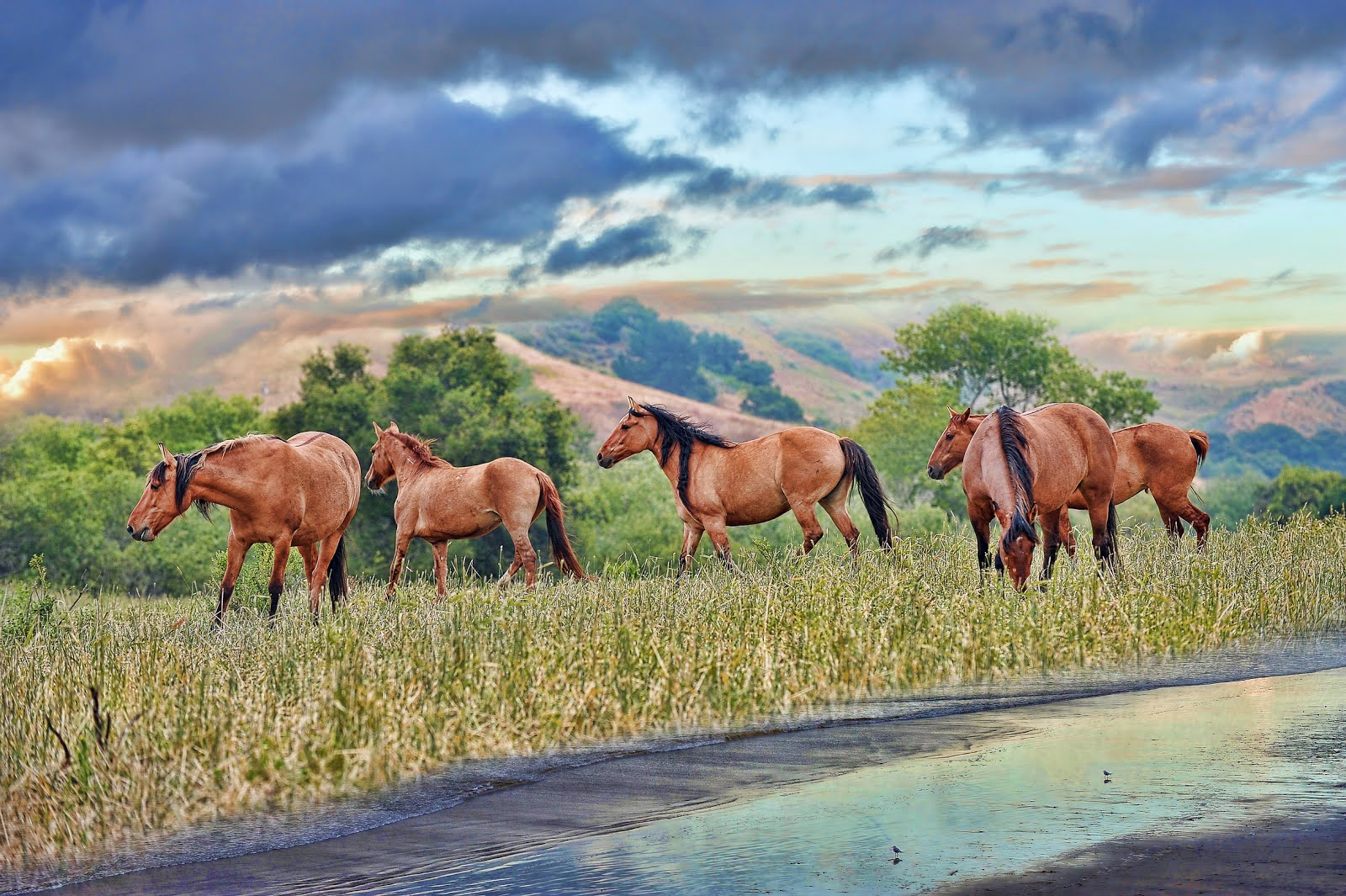 http://1.bp.blogspot.com/-YFyOwYwNeUA/UPxcRvl0CkI/AAAAAAABh-I/OL6NUHXgQVo/s1600/caballos-en-las-praderas-junto-al-rio-de-agua-clara-horses-near-to-the-river.jpg
