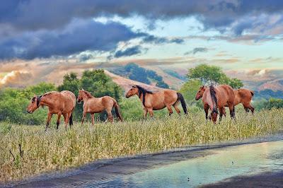 Caballos en los pastizales muy cerca del río