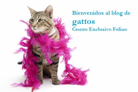 gattosblog