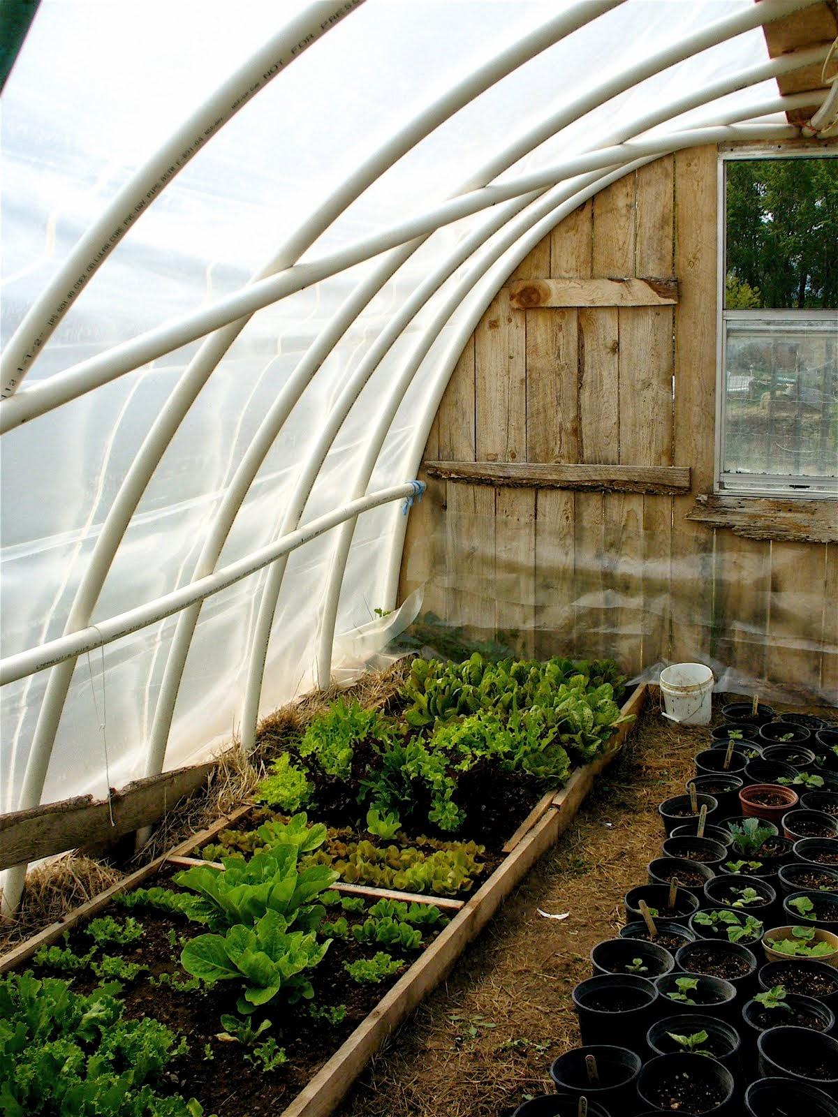 Diy hoop greenhouse instant knowledge for Diy hoop greenhouse