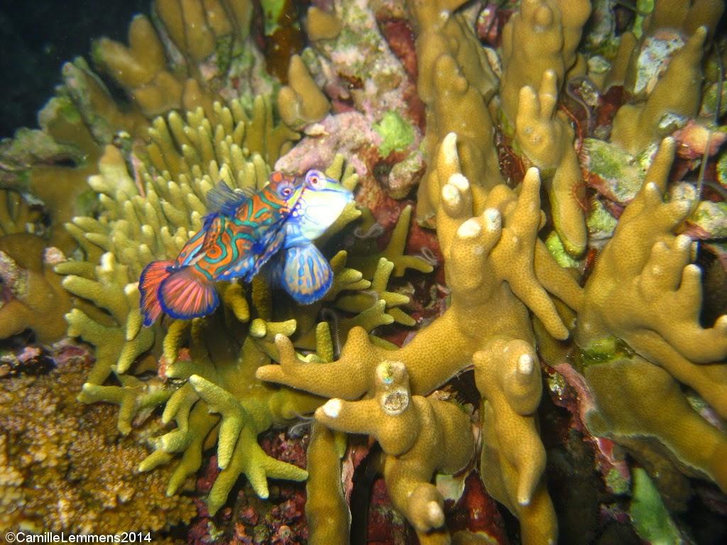 the reef crack sex