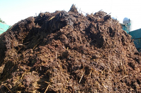 Aufbreitung des Nährsubstrats Pilzzucht - Komposthaufen