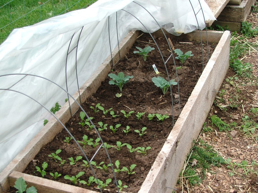 Hort Blog: The Raised Bed Club