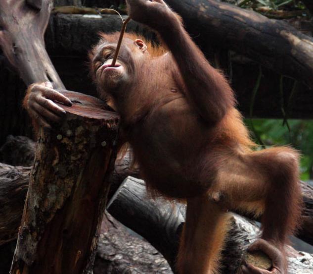 Tempat Wisata di Gembira Loka Zoo