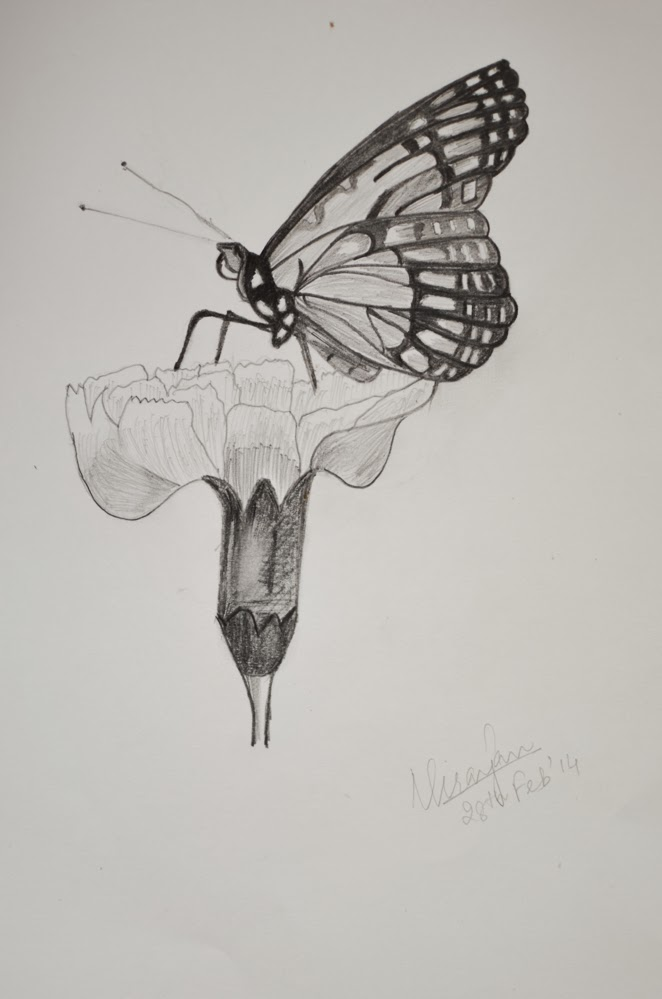 The butterfly pencil sketch