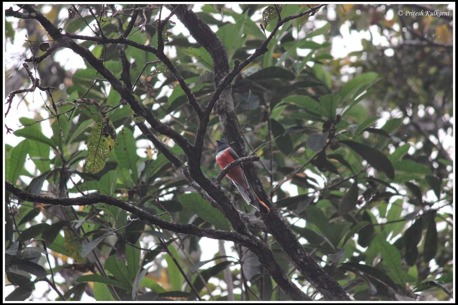 Malabar Trogon near Stream of Joy