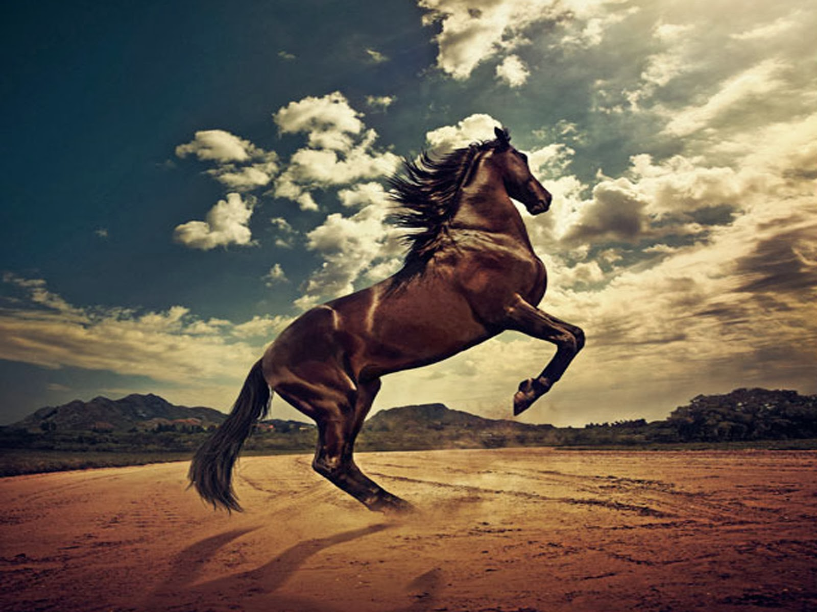 Horse HD Funny Wallpapers Funny Wallpapers