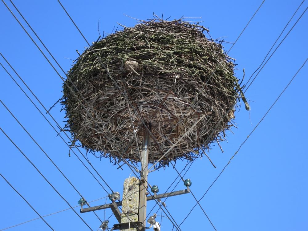 bocianie gniazdo na słupie telegraficznym, w Harkawiczach, na tle niebieskiego nieba