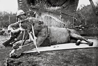 foto patterson dengan singa tsavo pertama yang dibunuhnya