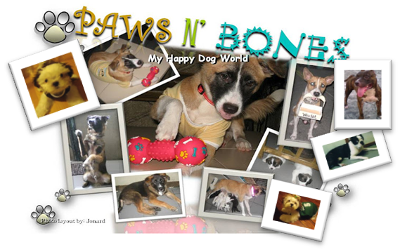 My Happy Dog World by Paws and Bones
