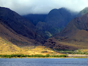 Maui Times (boi maui rain forest )