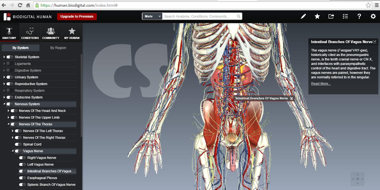 http://www.cerdasshare.com/2015/03/belajar-anatomi-tubuh-menggunakan.html