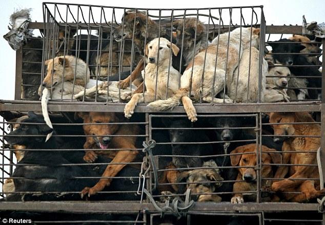 Pesta makanan di China dengan 15,000 ekor anjing dalam menu