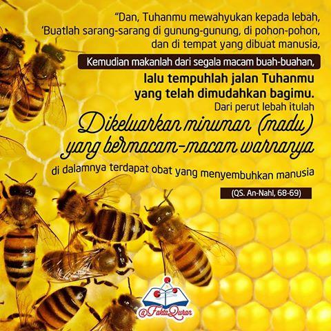 FaktaQuran8