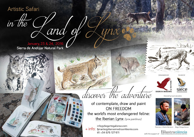 Artistic Safari IN THE LAND OF LYNX Sierra de Andujar Natural Park Diego Ortega Alonso Wildlife art illustration