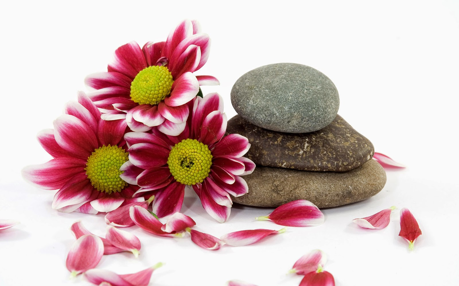 HD-Zen-stone-with-flowers-white-BG-HD-pictures-1920x1200.jpg