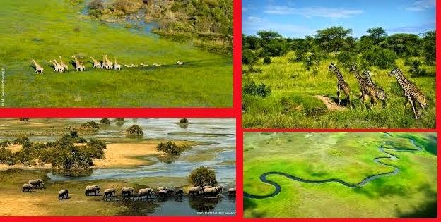 Le Botswana une destination touristique unique en Afrique