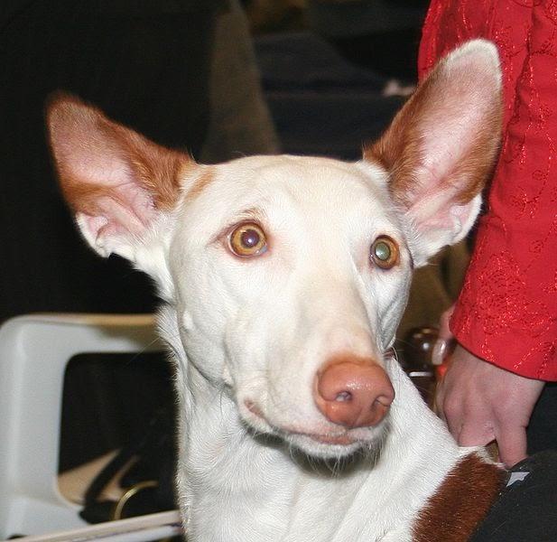 Dog Lover Show Melbourne