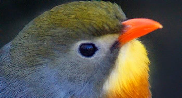 Fakta Terselubung dari Keunikan dan Fungsi Mata Hewan yang Wajib Anda Ketahui