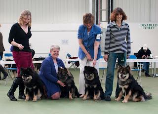 Finnish Lapphund Puppies - sire E Matkamies x E Penikka