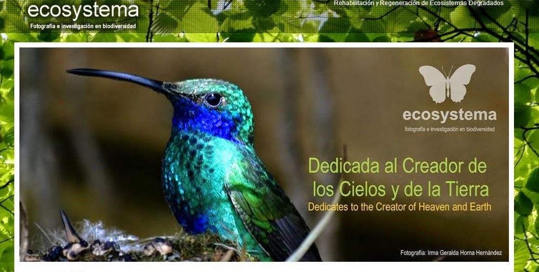 Animales Peruanos En Peligro De Extinci 211 N Ecosistema