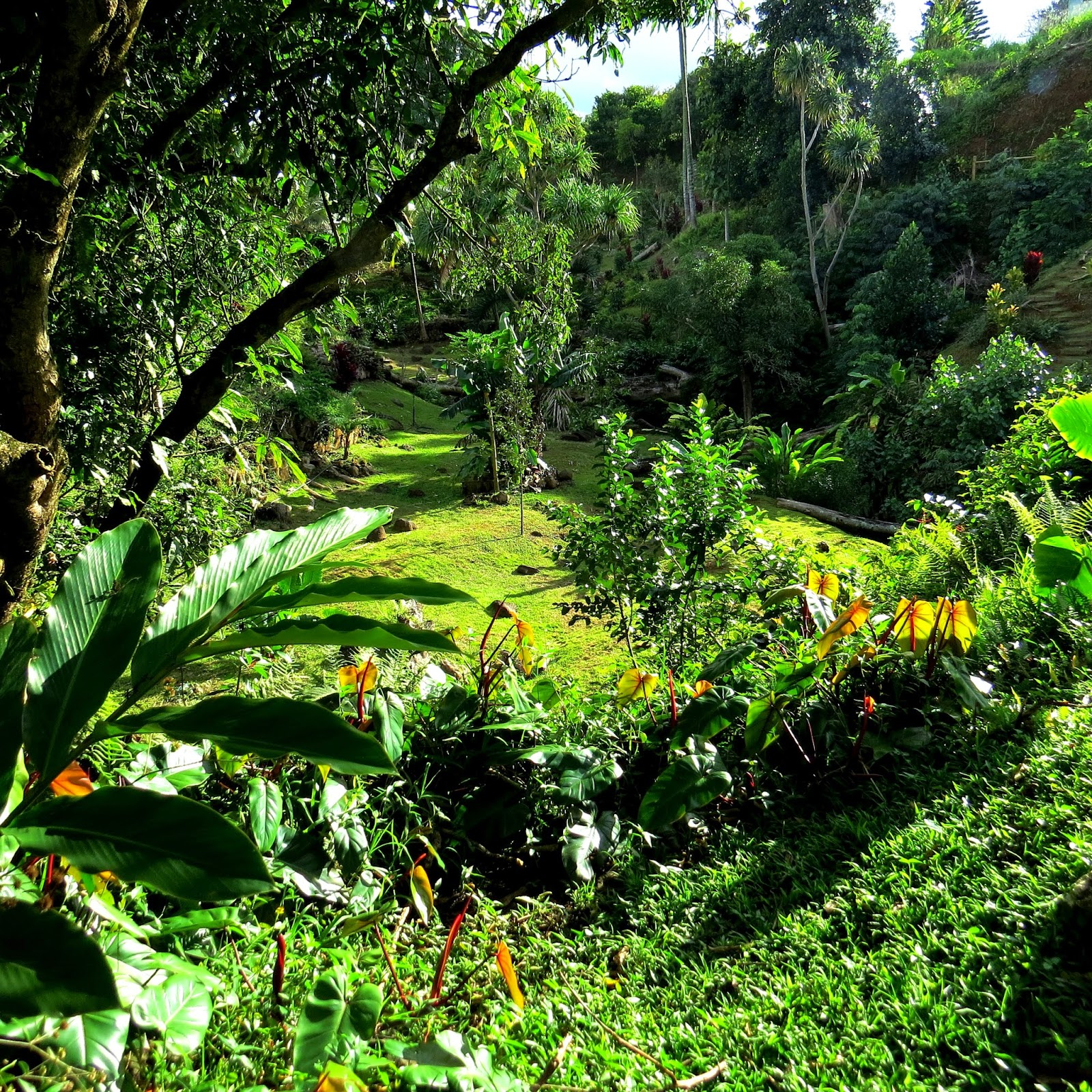 The Varying Shades Of Green And Lush Plants, Flowers And Tree Add To The  Exquisite Beauty Of The Princeville Botanical Gardens.