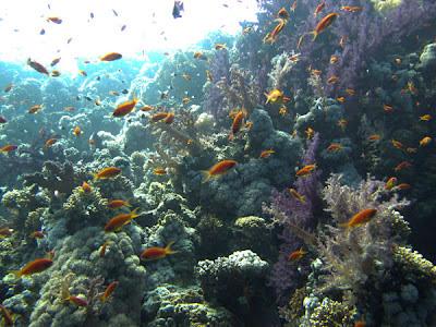 Mar Rojo, Sharm el Sheikh - Viaje a Egipto