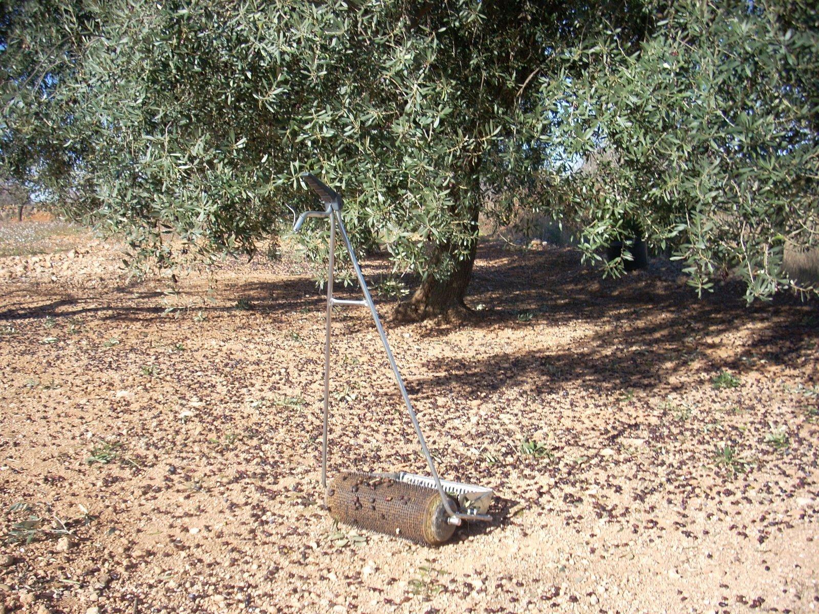 Busco comprar urgente necesito compra finca de olivos - Compra de olivos centenarios ...