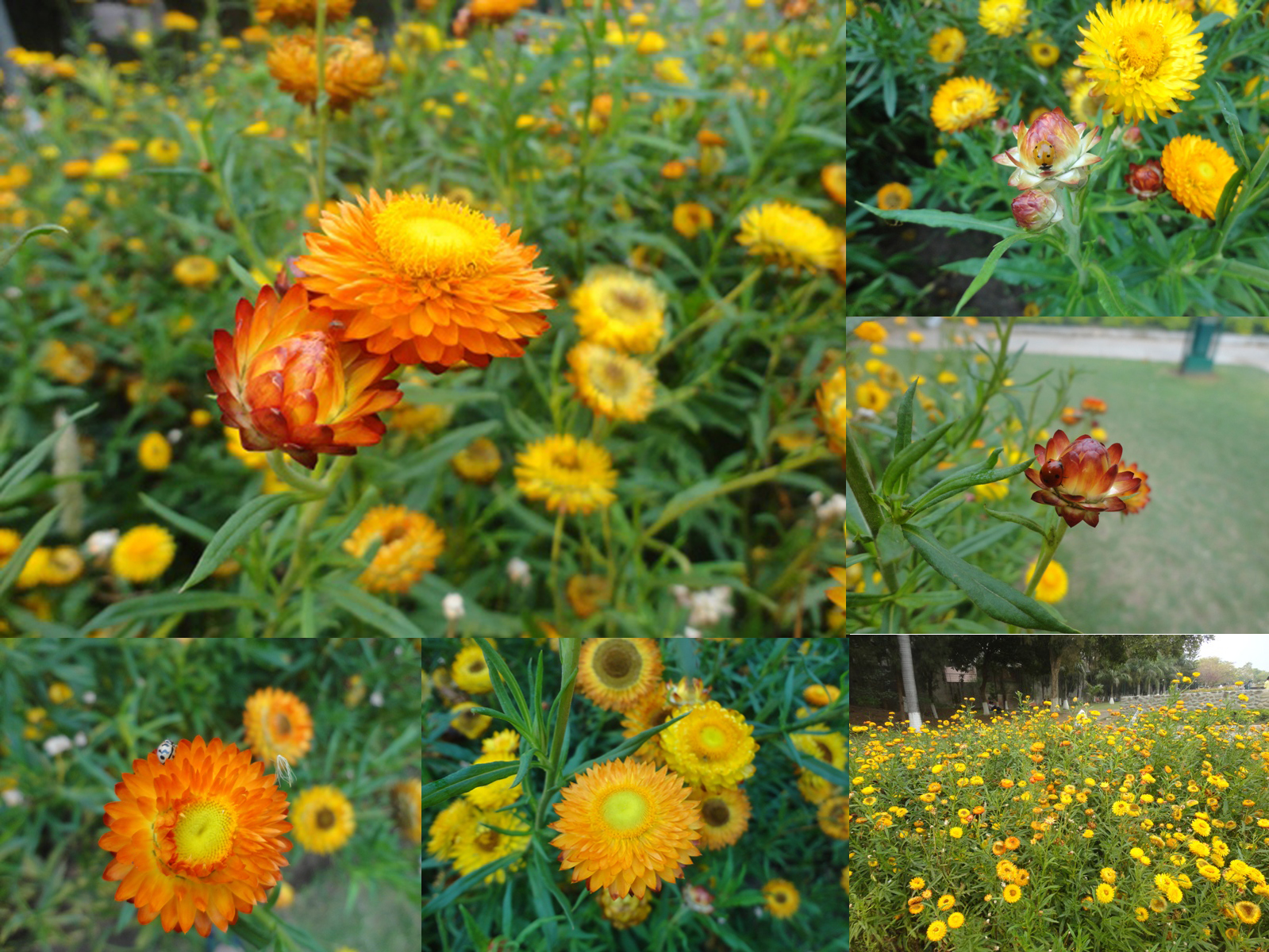 Cultures Chord By Hindustanka Flowers Ladybirds And We