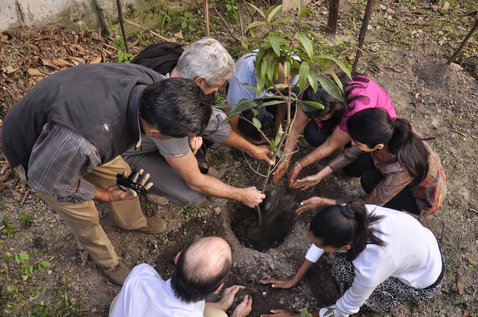 Fruit trees being planted by Murli Khemka and Meghna Khemka in Mulvany House, Kolkata, India.