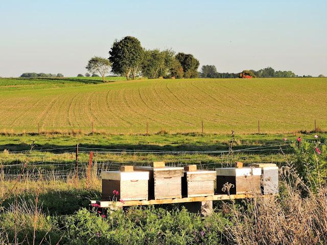 Ruches Terre de miel Walhain