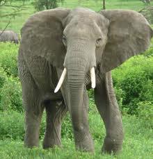 gambar hewan herbivora - gambar hewan - gambar hewan herbivora