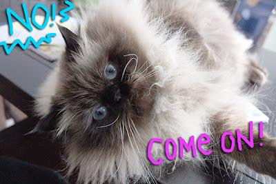 fluffy-cat-belly02