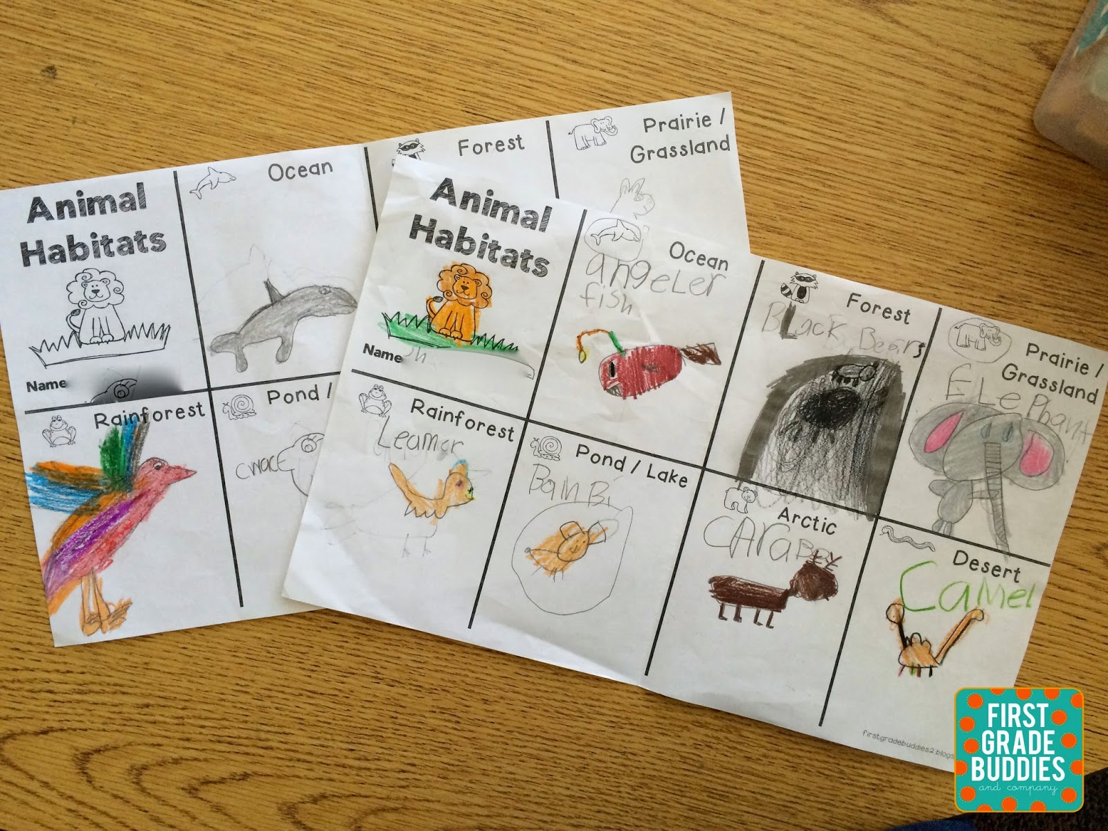 animal research paper for first grade