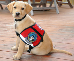 A puppy from the TSA breeding program.