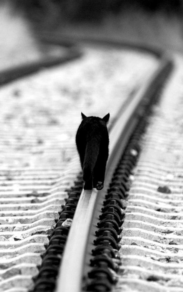Killig vandrer ad jernbane-skinne