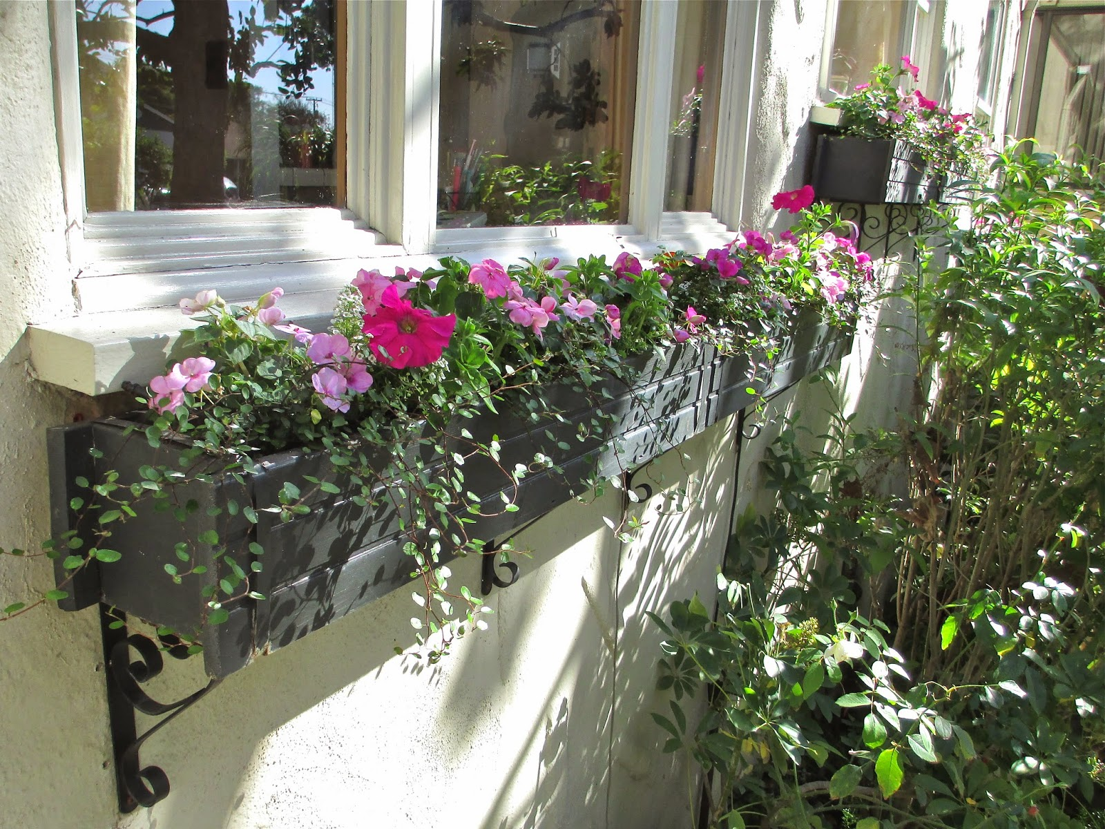 An s Way Spring Window Boxes Plenty of Pink