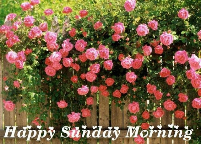 Good Morning Sunday Images 2015