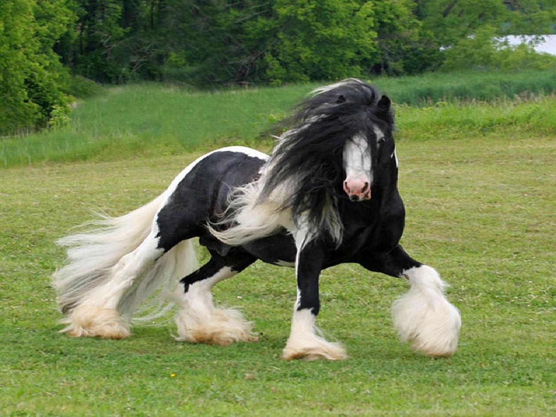 el caballo mas bonito