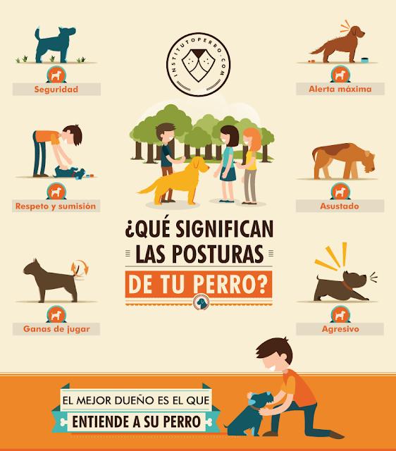 Las posturas de tus perros