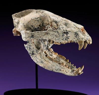 miocene fossil mammals