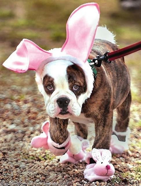 Funny puppy 10