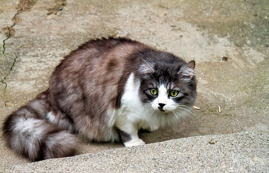 cat of istanbul