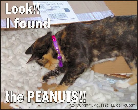 I found the peanuts cat critter funny photo image